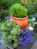 Garden Corner - Blue Lobelia