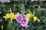 Hollyhocks & Lilies