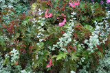 Ground Foliage - Begonia & Other Foliage