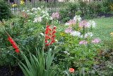 Garden View - Gladiolus, Cleome, Roses...