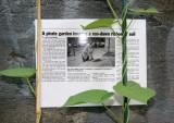 Sidewalk Gardener Credit