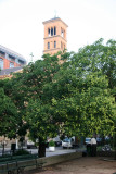 Golden Rain Tree & Judson Church Bell Tower