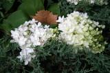 Hydrangea & Juniper