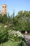 Park View - White Phlox & Judson Church Bell Tower