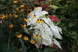 Caladium & Cone Flowers
