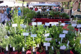 Farmers Market - Herbs for Sale