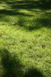 Morning Light - Grass