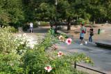 Park View - Hibiscus