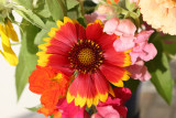 Home Grown Garden Bouquet -Gaillardia Aster & Snapdragons