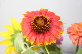 Home Grown Garden Bouquet - Gaillardia Aster
