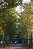 Sycamore Tree Arcade