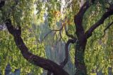Cherry & Willow Tree Foliage