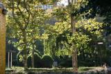 Morning Sunlight - Garden View
