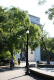 Arch & Scholar Tree