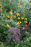 Marigolds & Sedum