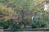 Garden View - Dogwood Tree