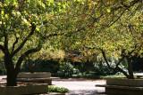 Garden View - Crab Apple Tree Foliage