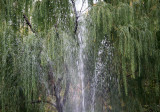 Fountain Spray & Weeping Willow Tree