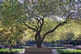 Garden View - Crab Apple Tree