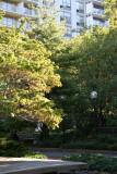Garden View - Dogwood, Pine & Apple Trees
