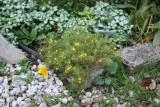 Garden Plot Corner