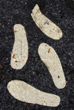 Golden Footprints under the White Hoop Dome Exhibit - Petrosino Square