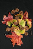 Fall Foliage Arrangement - Gum Tree Seed Balls, Maple & Ginkgo Foliage