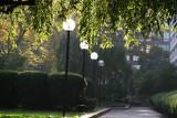 Garden View - Cherry Tree Foliage