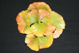 Ginkgo Foliage Arrangement