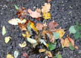 Sidewalk Foliage