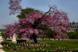springtime in the tuileries