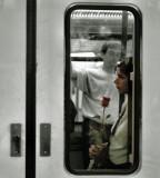 metro rose