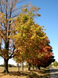 Oct 21 and the leaves are beginning to change colour