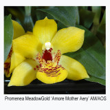 20061689 - Promenea Meadow Gold 'Amore Mother Aery' AM/AOS 83 pts.