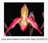 20061688 - Phrag Brecko Nitament  'Amore Father Joseph'  HCC/AOS 75 pts.