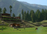 Fairy Meadows - 384.jpg