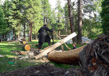 Cutting wood for huts - 386.jpg