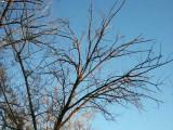 227-Dead Tamarisk Branches at Sunset.jpg