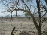 247-Tamarisk tree to Cadiz.jpg