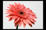 A flower for my friends !!!!