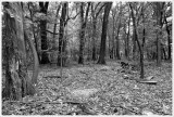 The Lakeview Woods