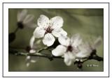 Fleuraison du jour
