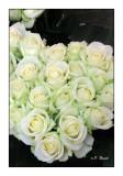 0220 - White Roses