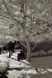 Walkway to Jacob Hamblin House