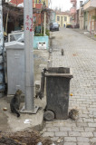 Canakkale 2006 2481.jpg