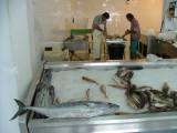 TunaFish in the Shop -Carmen