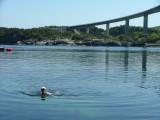 Christine Urquhart -captain of Viking Spirit-on a swim at RongeSund