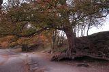 Old Trees on Friars Graig
