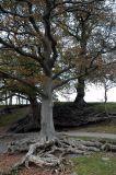 Old Tree on Friars Graig