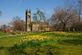 Church in Ashton-Under-Lyne with Blooming Daffodils.